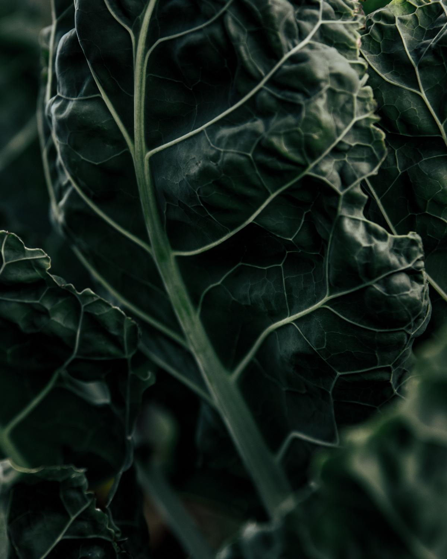 kale-petter-backlund